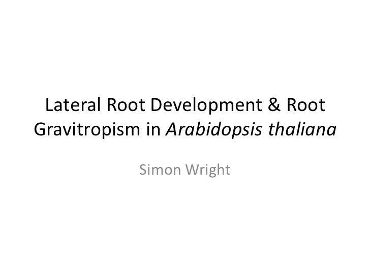Lateral Root Development & Root Gravitropism in Arabidopsis thaliana<br />Simon Wright<br />