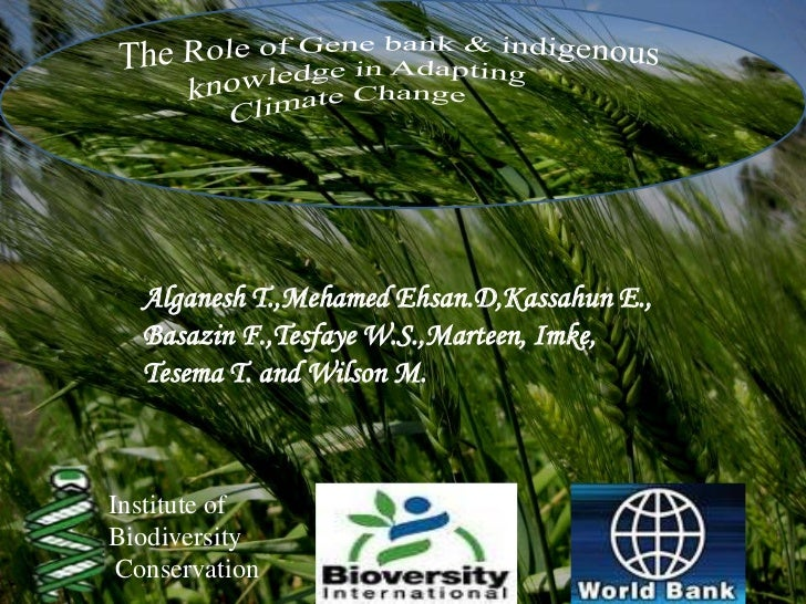 Tesema Alganesh: Role of gene bank in adaptation to climate change in three sites of Showa region in Ethiopia