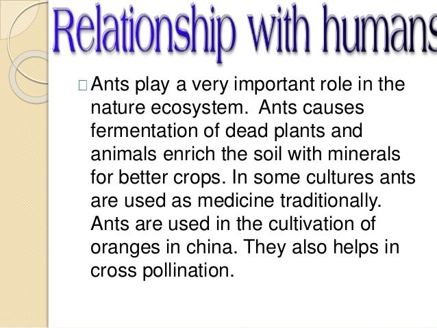 an essay on ants and their role in the ecosystem Find more fun facts about ants and other ant information for kids in our ant pest guide  these ants and their telltale mound nests should be actively avoided.