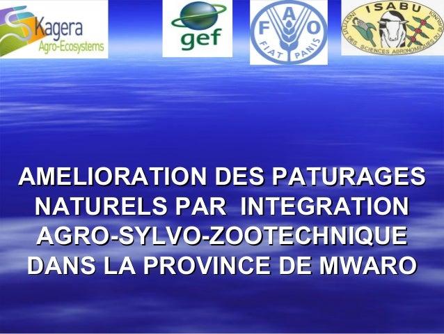 AMELIORATION DES PATURAGESAMELIORATION DES PATURAGES NATURELS PAR INTEGRATIONNATURELS PAR INTEGRATION AGRO-SYLVO-ZOOTECHNI...