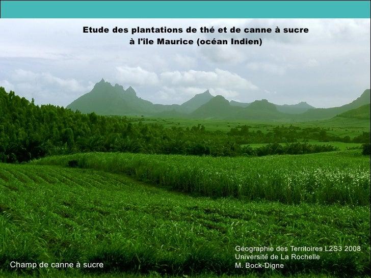 Géographie des Territoires L2S3 2008 Université de La Rochelle M. Bock-Digne Etude des plantations de thé et de canne à su...
