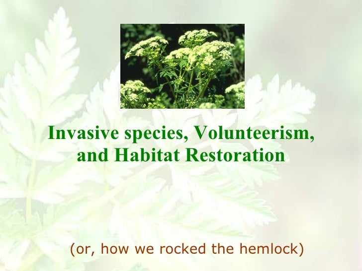 Invasive species, Volunteerism, and Habitat Restoration (or, how we rocked the hemlock)