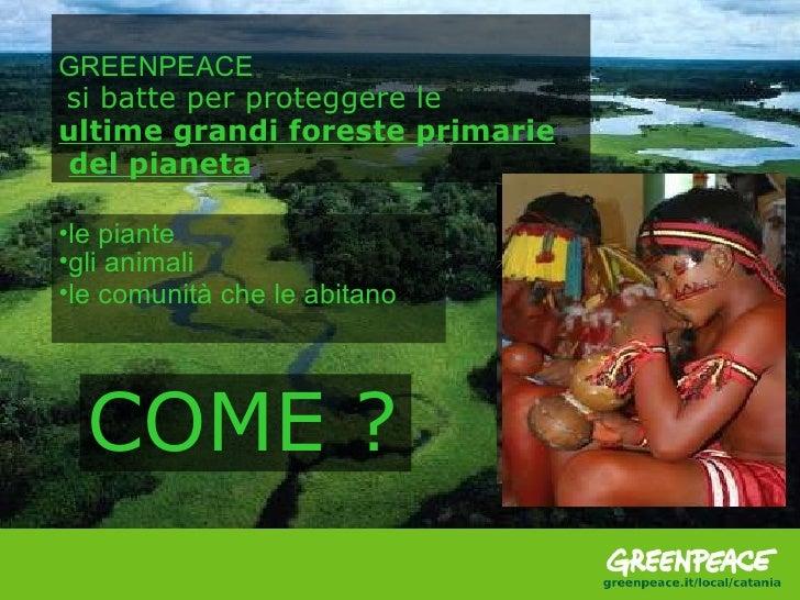 GREENPEACE si batte per proteggere le  ultime grandi foreste primarie del pianeta <ul><li>le piante </li></ul><ul><li>gli ...