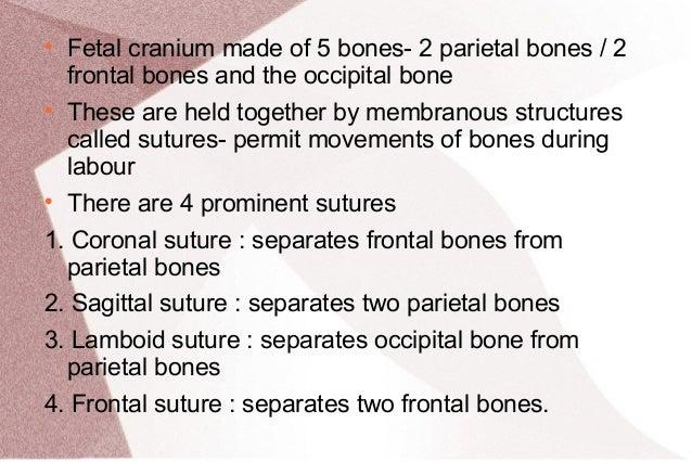 5 Bones of The Fetal Skull Fetal Cranium Made of 5 Bones