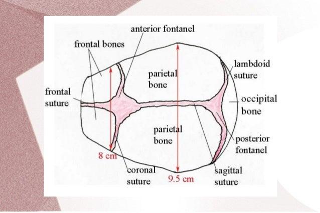 Presenting diameters
