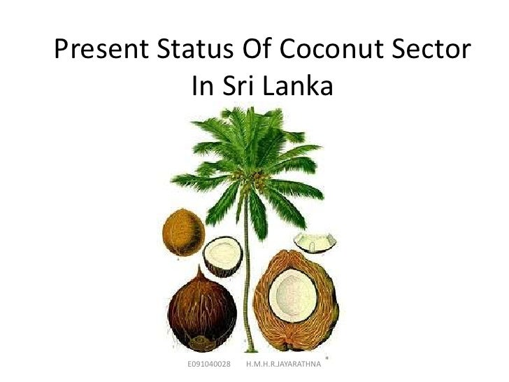 Present Status Of Coconut Sector           In Sri Lanka          E091040028   H.M.H.R.JAYARATHNA