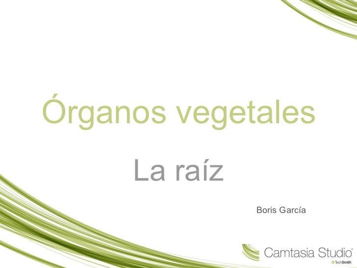 Órganos vegetales La raíz Boris García