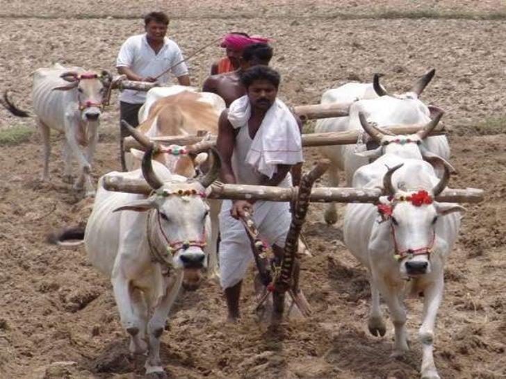 Presntation on farmer suicides