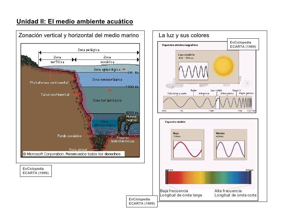 Unidad II: El medio ambiente acuático  Zonación vertical y horizontal del medio marino            La luz y sus colores    ...