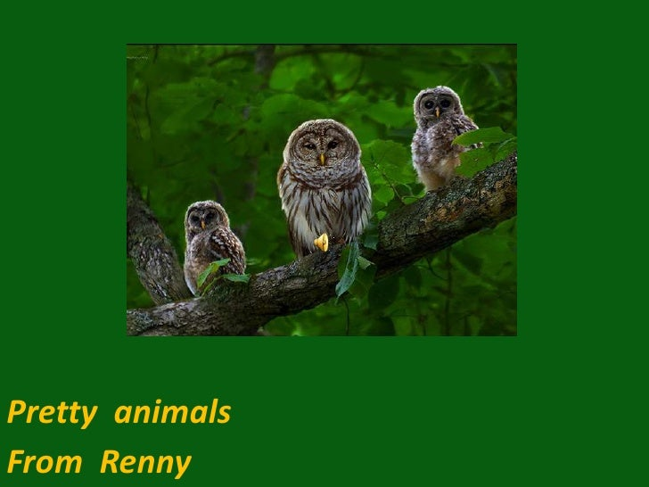Pretty  animals <br />From  Renny<br />