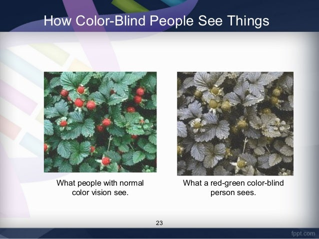 What Are The Types Of Color Blindness Different Types