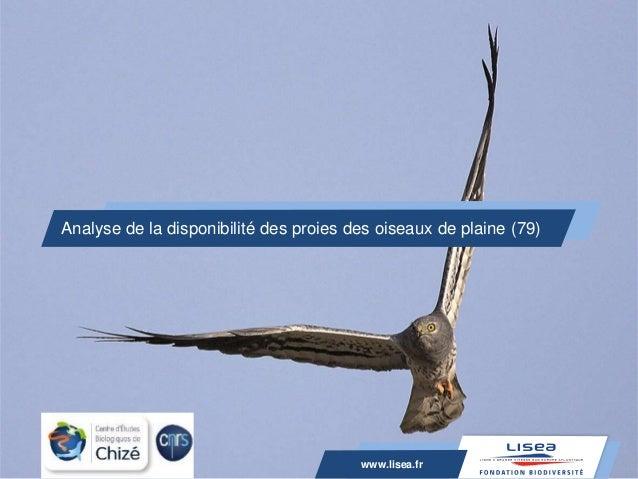 www.lisea.fr Analyse de la disponibilité des proies des oiseaux de plaine (79) www.lisea.fr