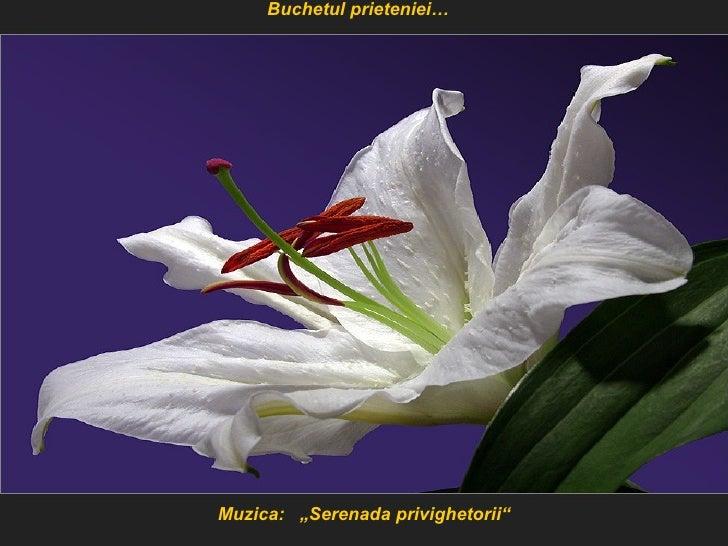 "Muzica:  ""Serenada privighetorii"" Buchetul prieteniei…"