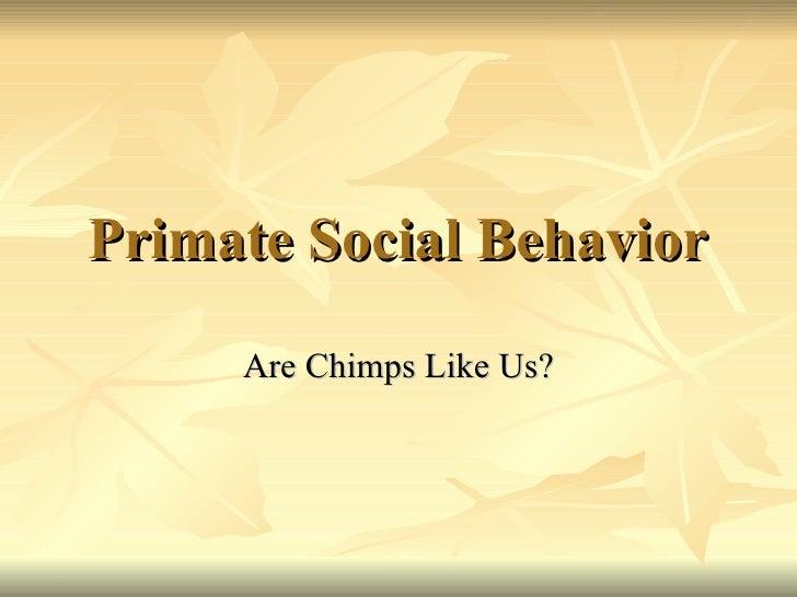 Primate Social Behavior Are Chimps Like Us?