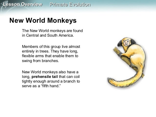 primate evolution Online shopping from a great selection at books store.