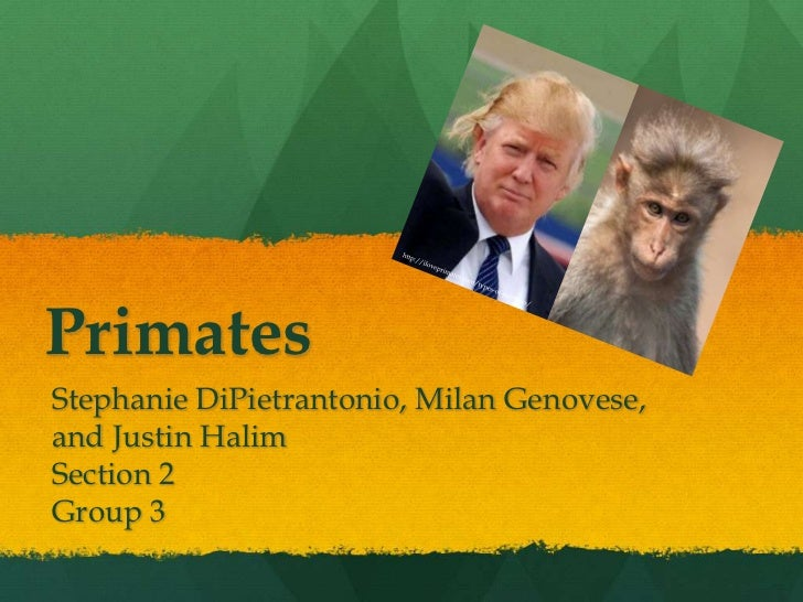 PrimatesStephanie DiPietrantonio, Milan Genovese,and Justin HalimSection 2Group 3