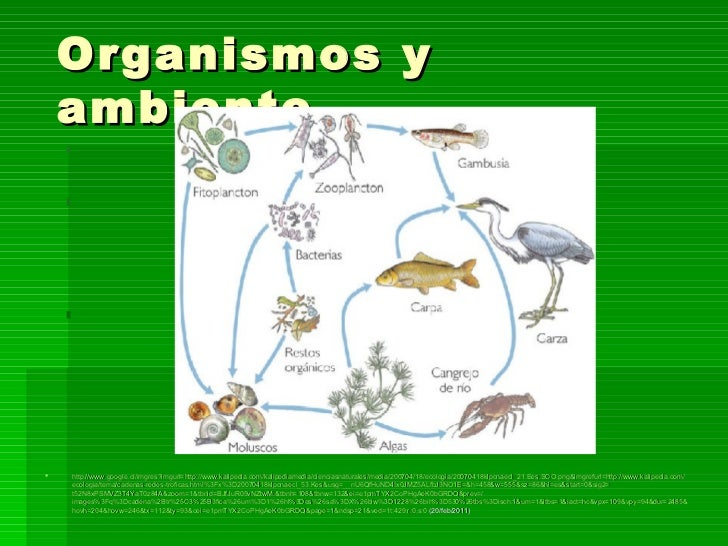 Organismos y  ambiente <ul><li>http :// www.google.cl / imgres?imgurl = http :// www.kalipedia.com / kalipediamedia / cien...