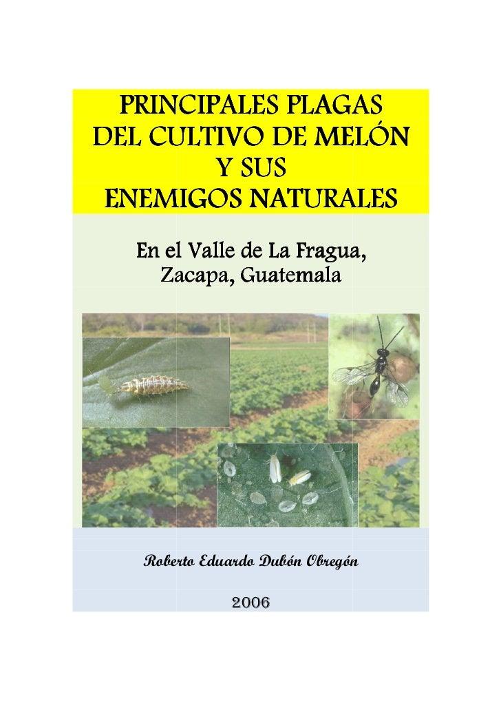 Principales plagas del cultivo de melon y sus enemigos naturales