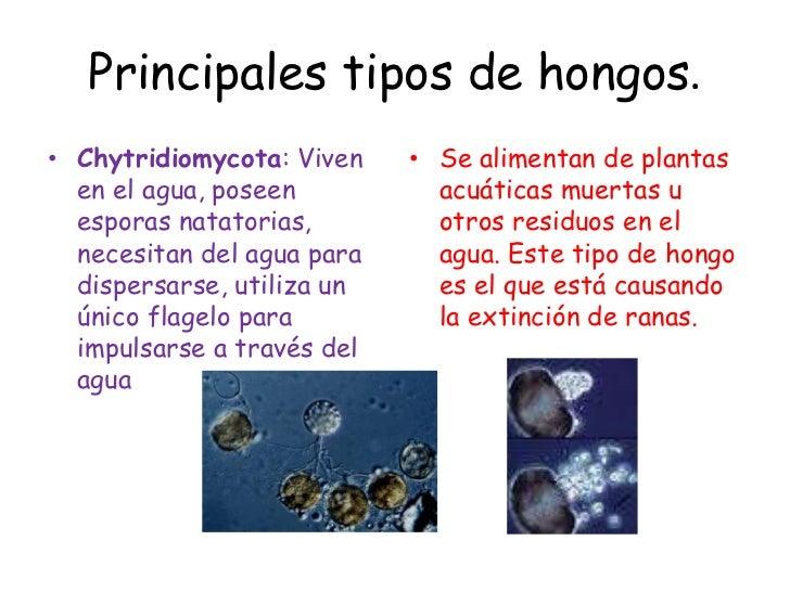 Principales tipos de hongos - Tipos de hongos en la pared ...
