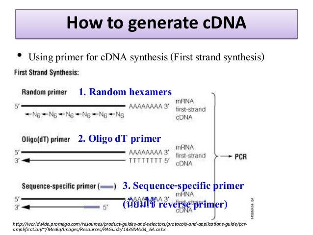 Write my cdna sythesis