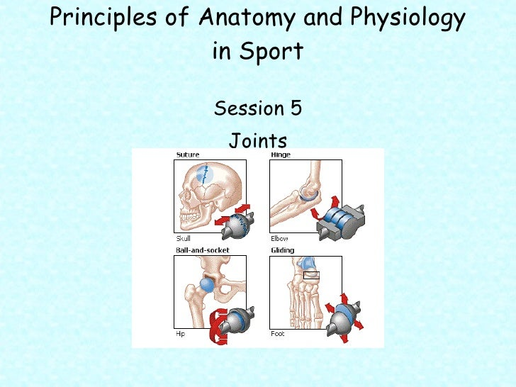Principles of Anatomy and Physiology in Sport <ul><li>Session 5 </li></ul><ul><li>Joints </li></ul>