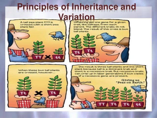 Principles of Inheritance, Class 12 CBSE
