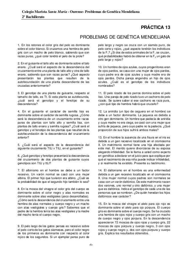 Colegio Marista Santa María - Ourense- Problemas de Genética Mendeliana 2º Bachillerato -1- PRÁCTICA 13 PROBLEMAS DE GENÉT...