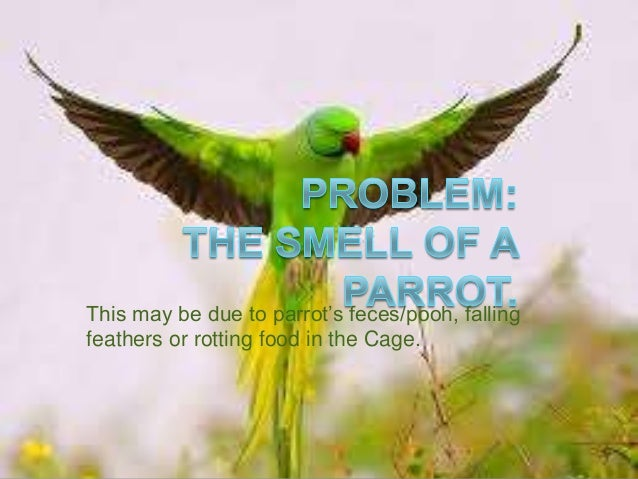 Problem related to Parrots' smell