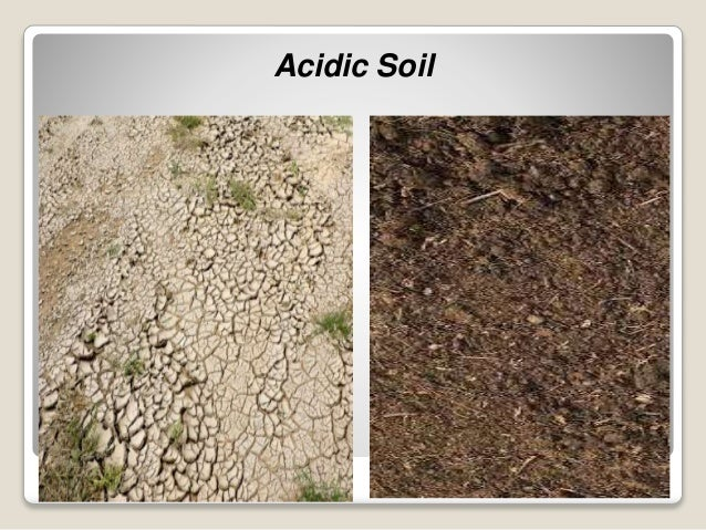 Problematic soil for What does soil