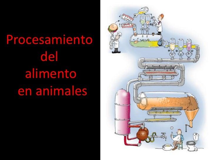 Procesamiento  del  alimento  en animales