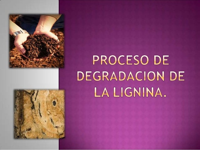  Recordemos ¿que es la lignina?La lignina es un polímero no cristalino queproporciona resistencia y rigidez dentro delas ...