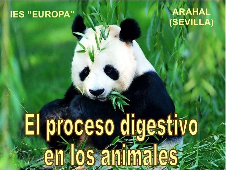 """IES """"EUROPA"""" ARAHAL (SEVILLA) El proceso digestivo  en los animales"""