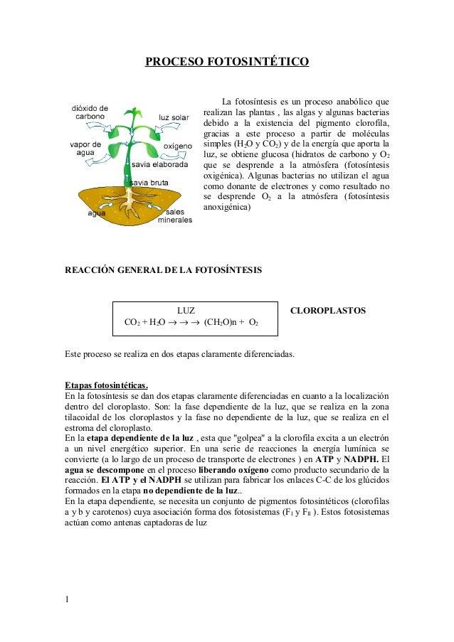 PROCESO FOTOSINTÉTICO La fotosíntesis es un proceso anabólico que realizan las plantas , las algas y algunas bacterias deb...