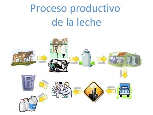 Circuito Productivo De La Leche : Proceso productivo de la leche final