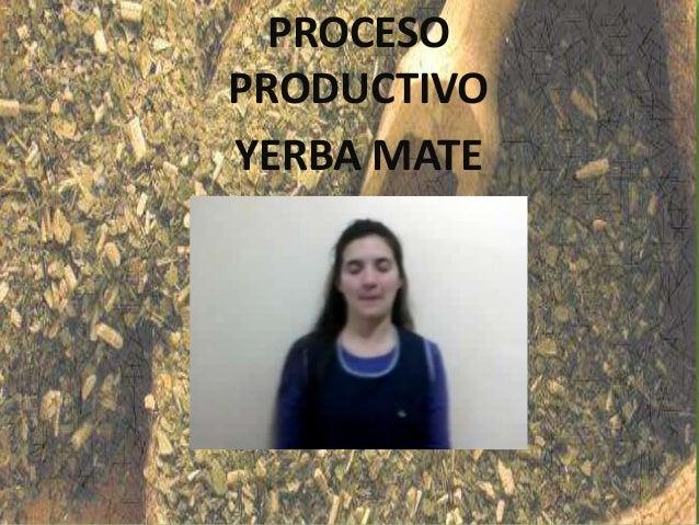 Circuito Yerba Mate : Proceso productivo quot yerba mate profesorado de educación
