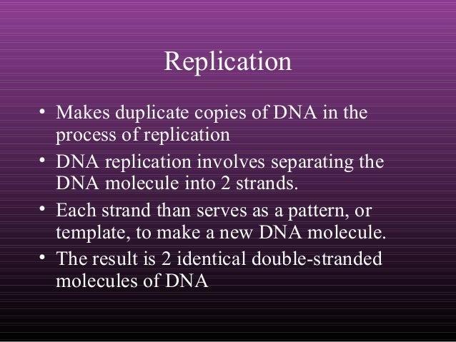 Dna Replication Protein Dna Replication Involves