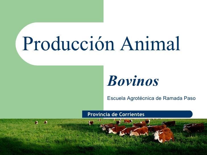 Producción Animal Escuela Agrotécnica de Ramada Paso Bovinos Provincia de Corrientes