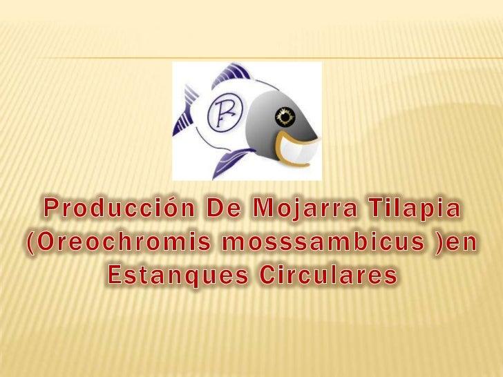 Producción De Mojarra Tilapia (Oreochromis mosssambicus )en Estanques Circulares<br />