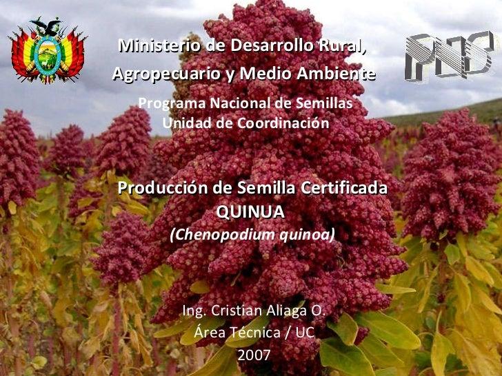 Producción_de _semilla_certificada_de_quinua_PNS_R.M.