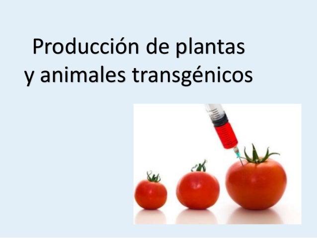 Produccion de plantas y animales transgenicos for Produccion de plantas ornamentales pdf
