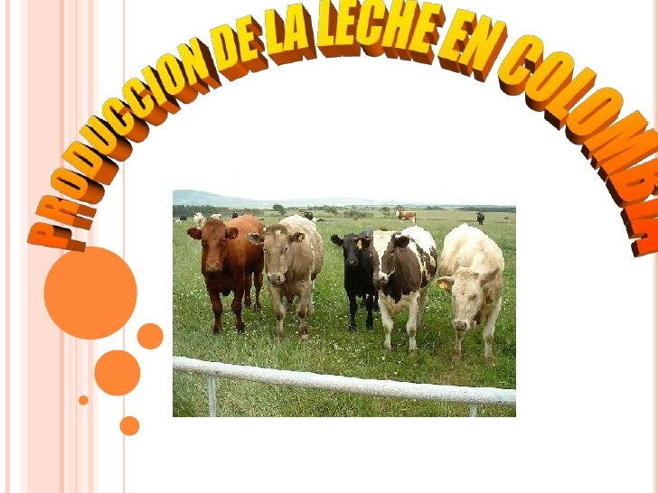 Produccion de leche en colombia