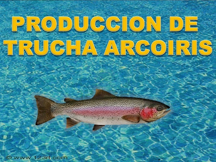 Produccion de trucha arcoiris for Crianza de truchas en estanques