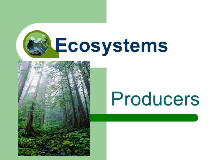Producers Ecosystems