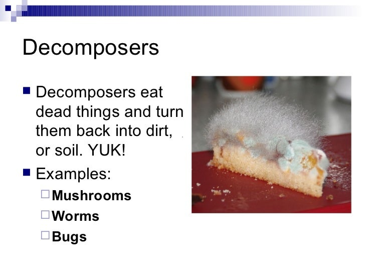 Examples Of Decomposers Pictures to Pin on Pinterest ...