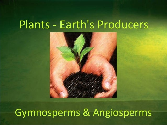 Plants - Earth's Producers  Gymnosperms & Angiosperms