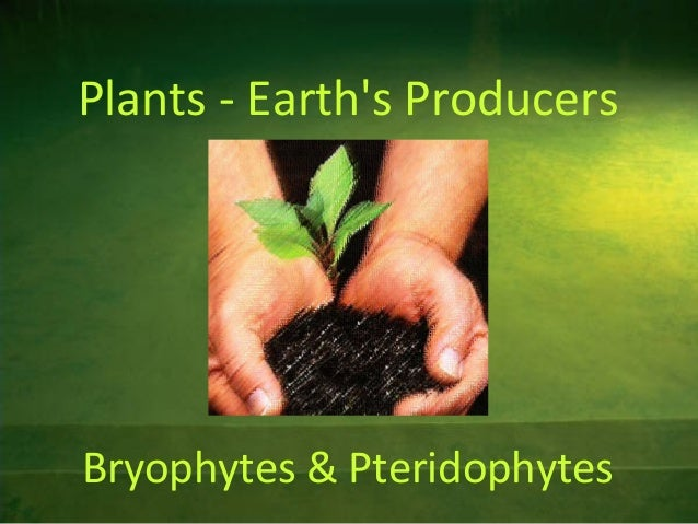 Plants - Earth's Producers  Bryophytes & Pteridophytes