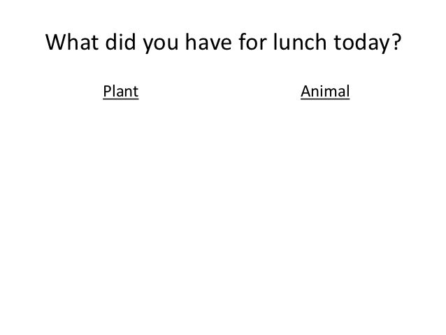What did you have for lunch today?     Plant              Animal
