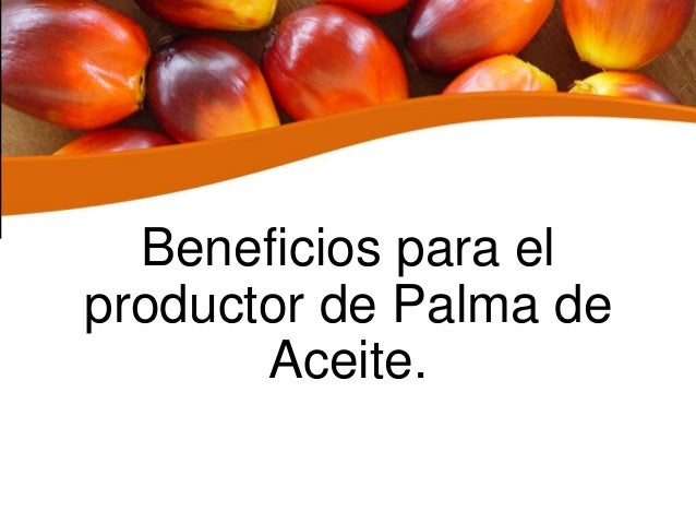 Beneficios para el productor de Palma de Aceite.