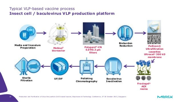 Production And Purification Of Virus Like Particle  Vlp  Based Vaccine