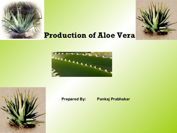 Production Of Aloe Vera